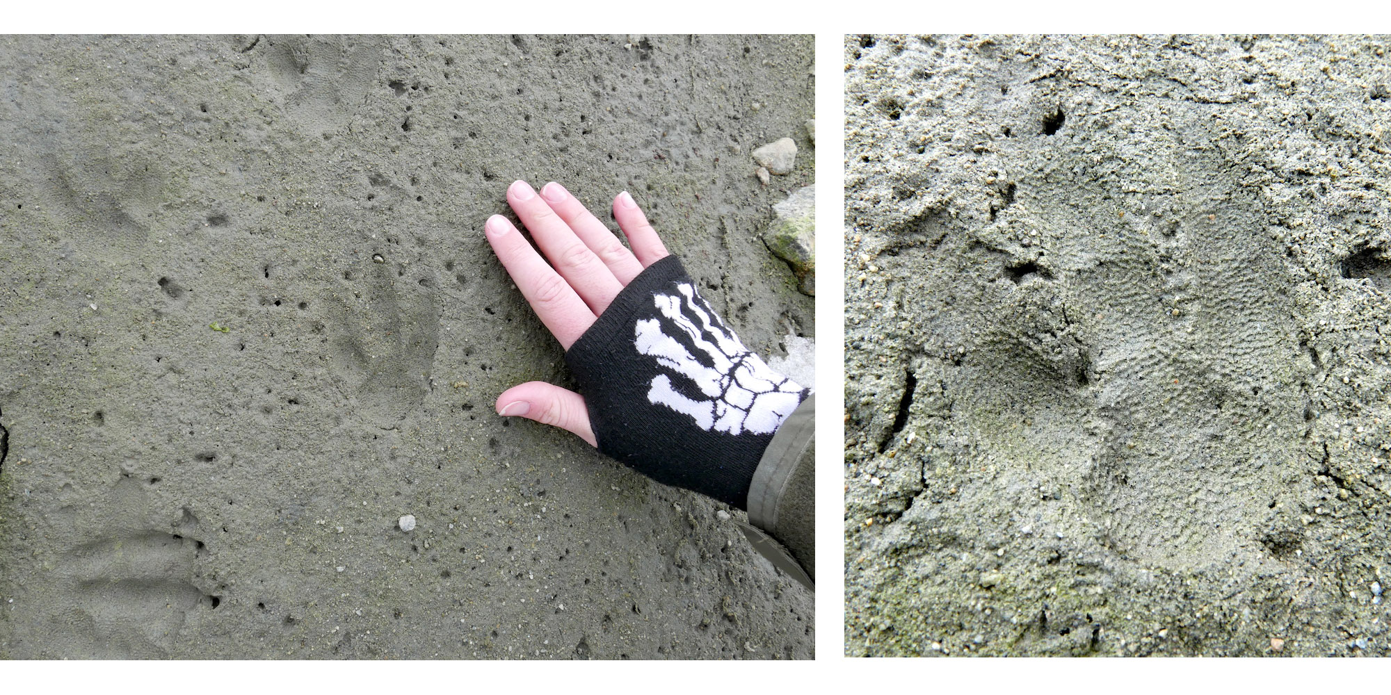 Penguin footprint in sediment